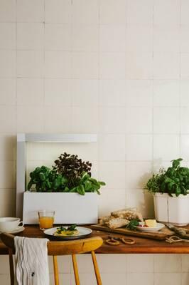 Tregren Herbie hydroponic indoor garden kitchen