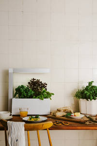 Tregren Herbie hydroponic indoor garden kitchen
